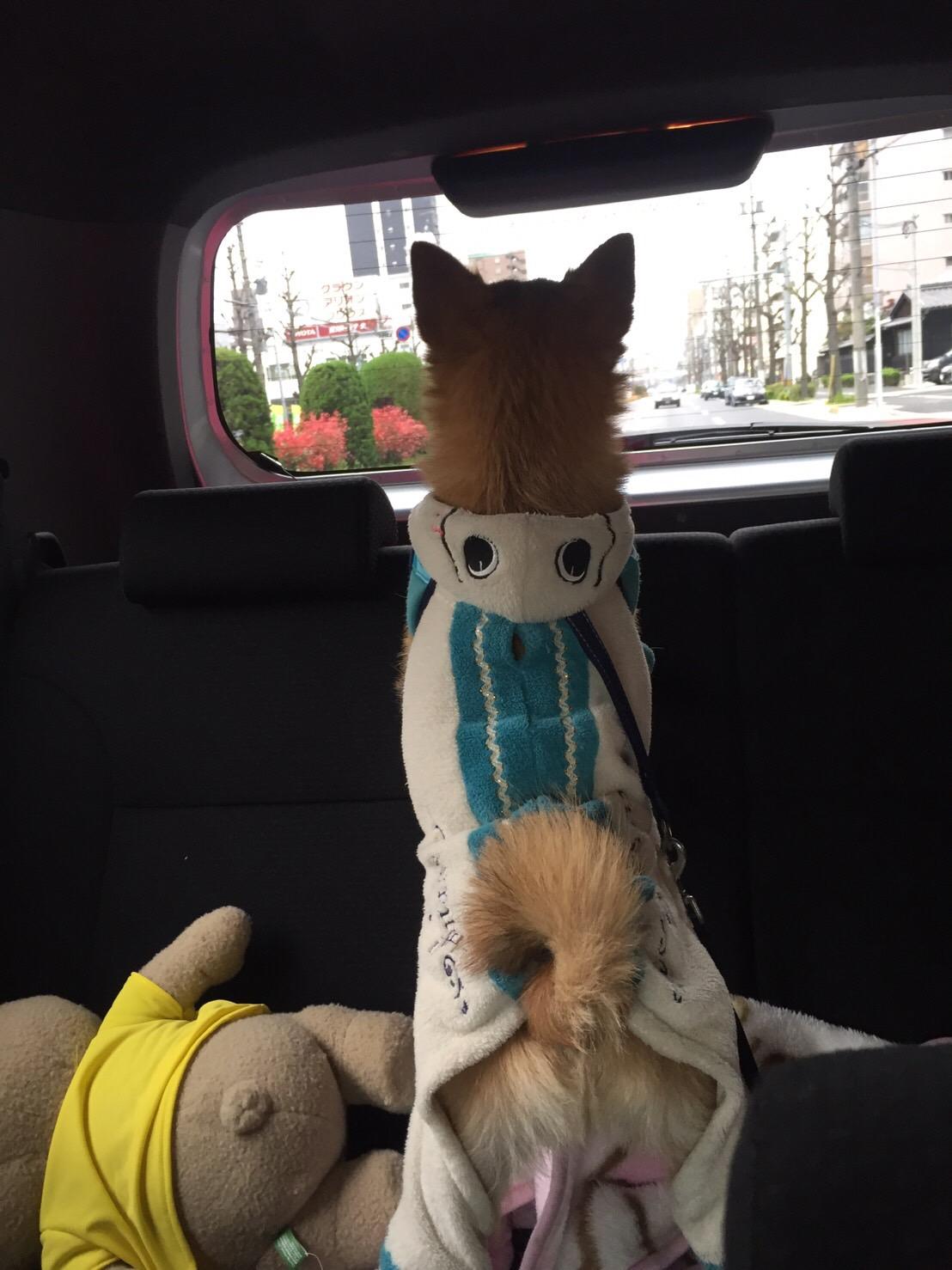 しおん|フェアリーテイル - 名古屋風俗