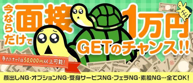 もしもし亀よ亀さんよ 名古屋店(名古屋)のデリヘル求人・高収入バイトPR画像1