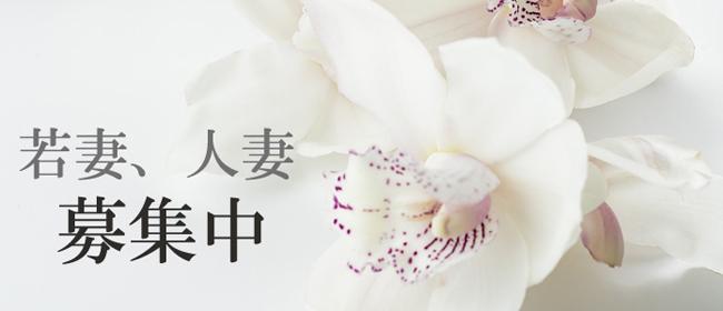 ~S級美人人妻専門店~人妻collection(岡山市内)のデリヘル求人・高収入バイトPR画像1
