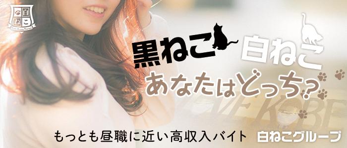 白ねこエステ(神戸・三宮一般メンズエステ(店舗型)店)の風俗求人・高収入バイト求人PR画像3