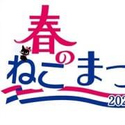 「本日限定!春のねこまつり開催中♪」04/21(水) 11:08 | やんちゃな子猫日本橋店のお得なニュース