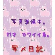 ちい | めちゃなめ子猫(熊本市近郊)