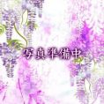 1月19日体験入店47歳|北九州・熟女専門処・紫蘭マダム