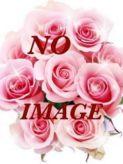 椎名(しいな)|Platinum Heartsでおすすめの女の子