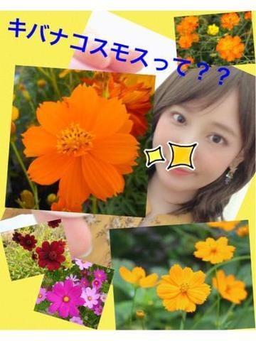 「久々のお花日記※かなりの長文になります」10/28(10/28) 00:02 | けいこの写メ・風俗動画