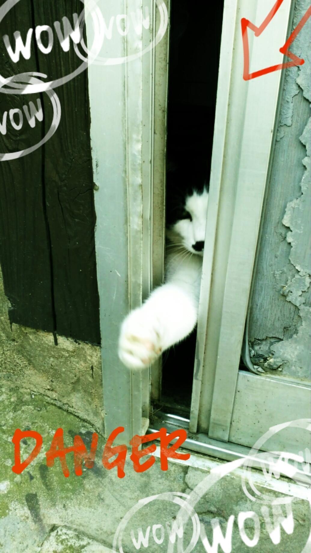 「ひらくとゴマ。」11/07(11/07) 09:54 | 相葉の写メ・風俗動画