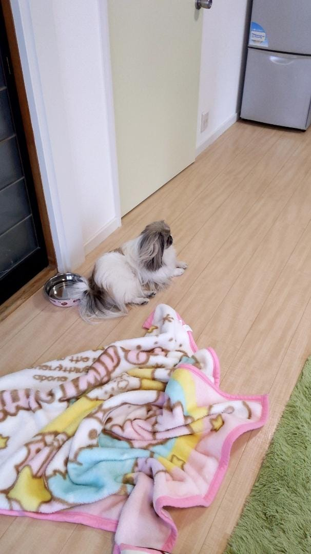 「こんばんは〜」02/21(02/21) 00:48 | とわの写メ・風俗動画