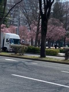「サクラ」03/26(03/26) 11:30 | かえでの写メ・風俗動画
