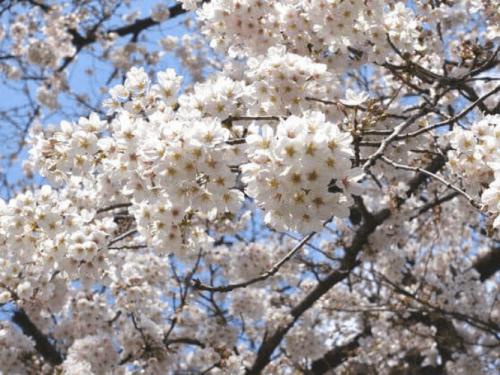 「1週間お疲れ様です(⋆ᵕᴗᵕ⋆).+*」03/26(03/26) 18:09 | クロハの写メ・風俗動画
