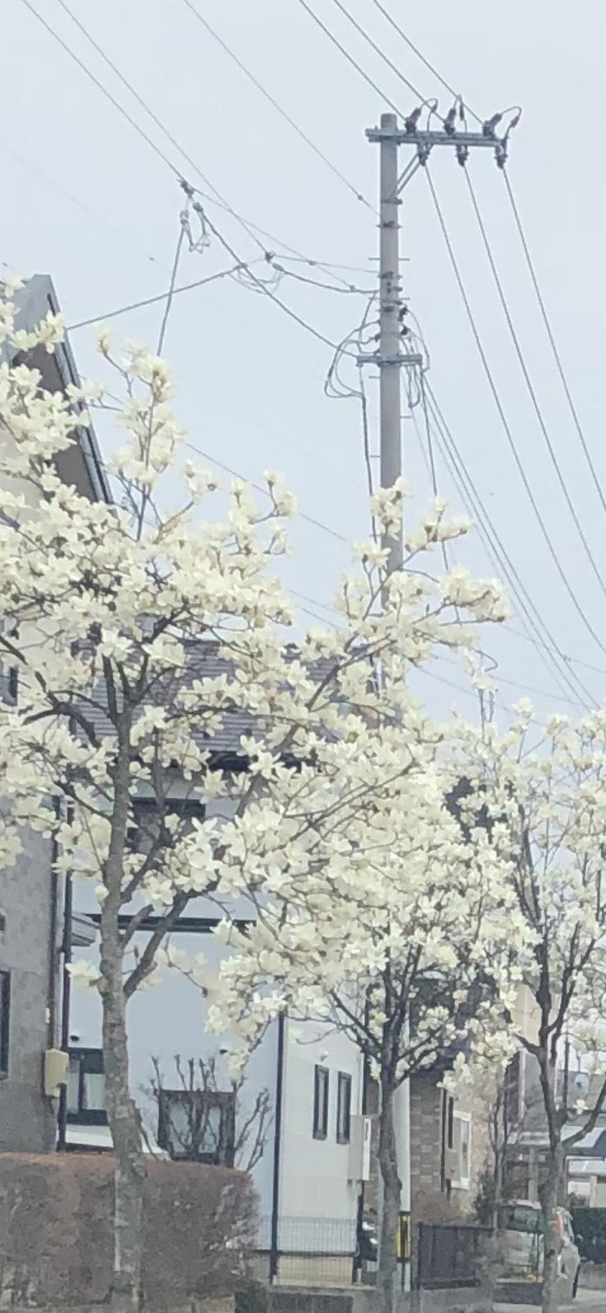 「花より団子(団子)」03/28(03/28) 18:59 | りりあの写メ・風俗動画