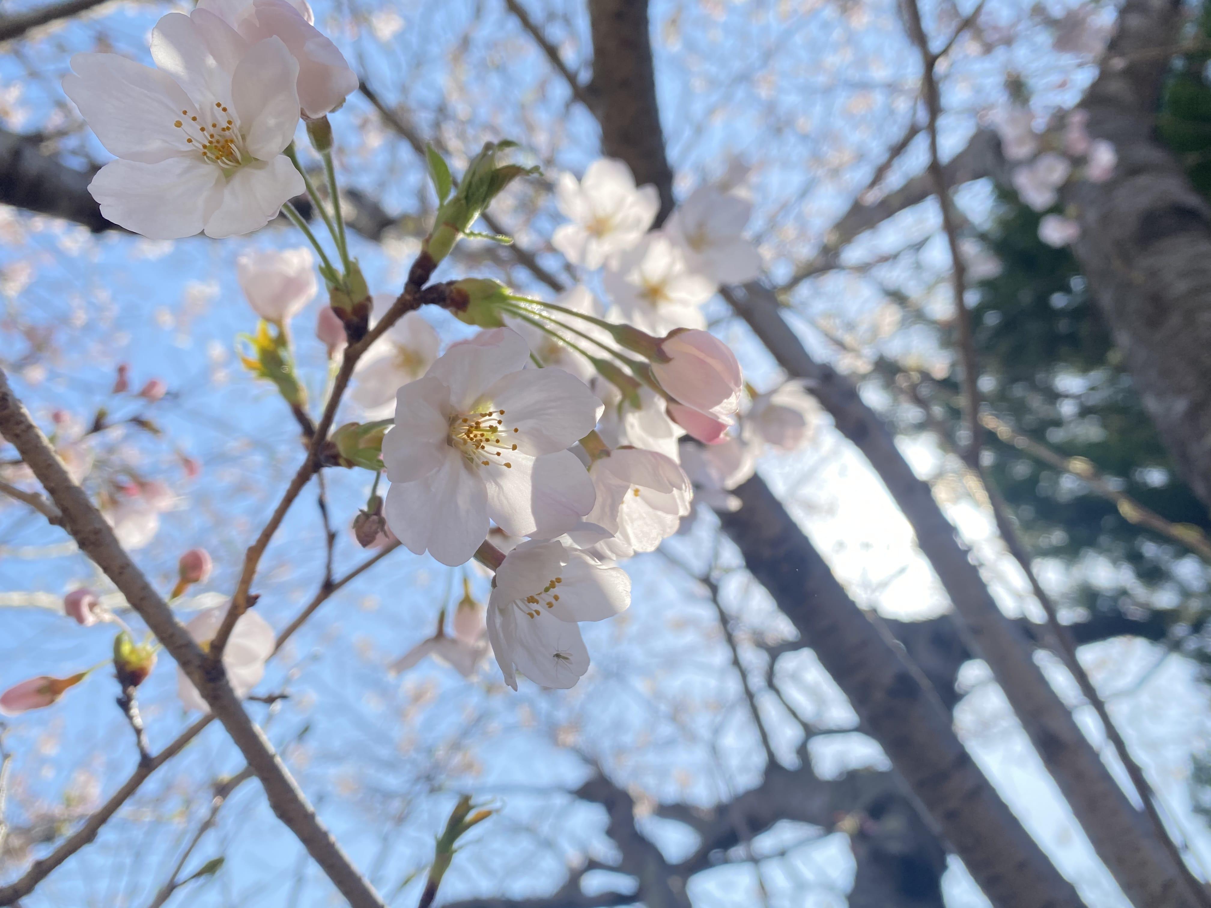 「出勤♡」03/29(03/29) 22:31 | ゆい先生ーYUI-の写メ・風俗動画