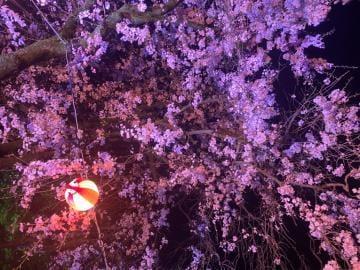 「お花見?」04/02(04/02) 21:38   みつきの写メ・風俗動画
