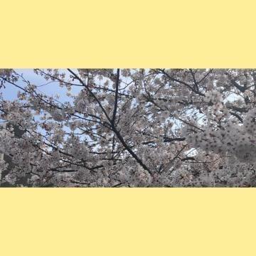「体験2日目です!」04/05(04/05) 10:35 | 彩-あやの写メ・風俗動画