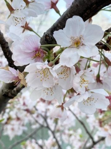 「ニコニコ?? day」04/08(04/08) 09:15 | なおの写メ・風俗動画