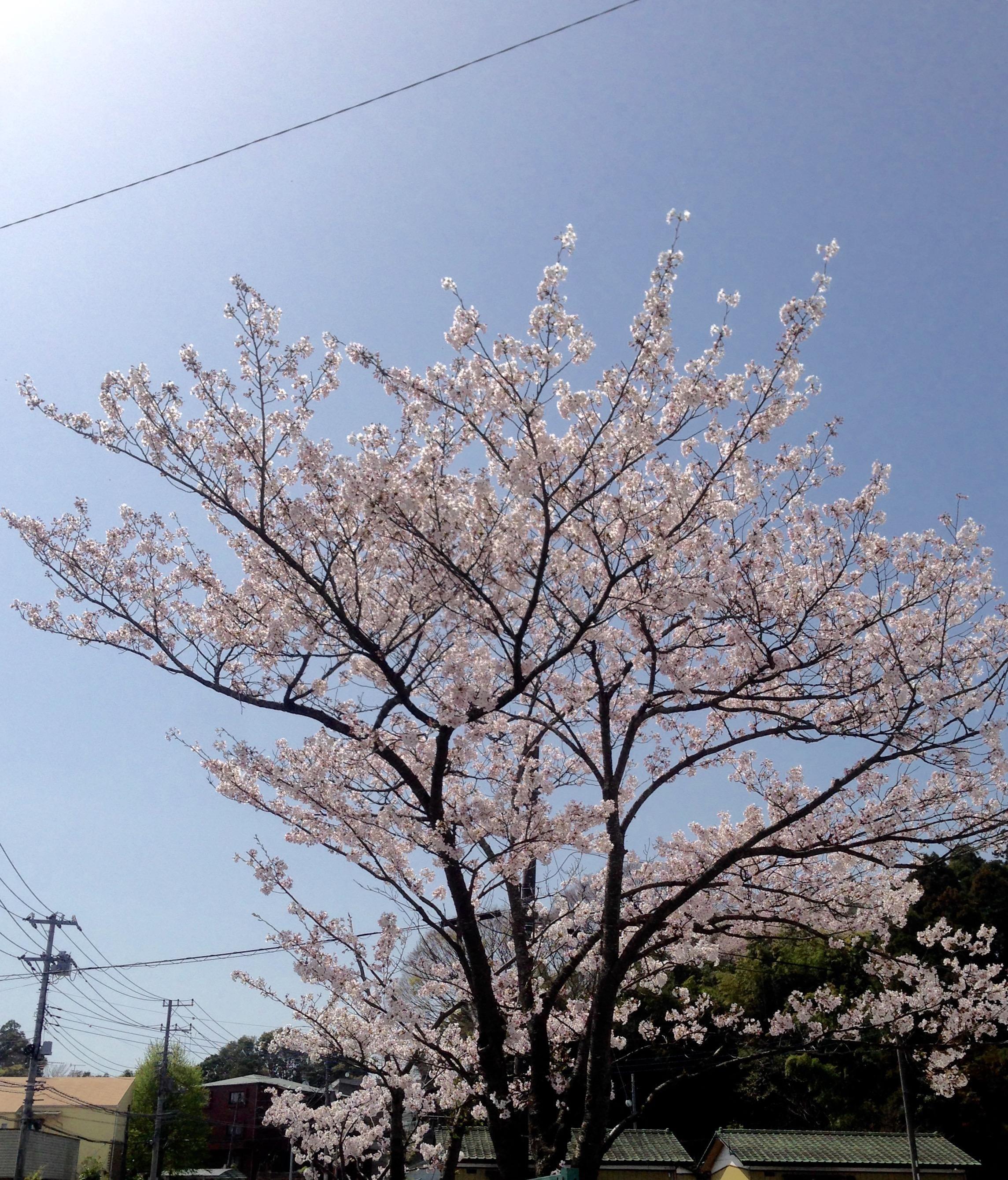 「月曜日」04/12(04/12) 14:32 | さらの写メ・風俗動画