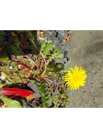 「私はお花やさん(^^)d」04/16(04/16) 23:05 | りか〇超美熟女の写メ・風俗動画