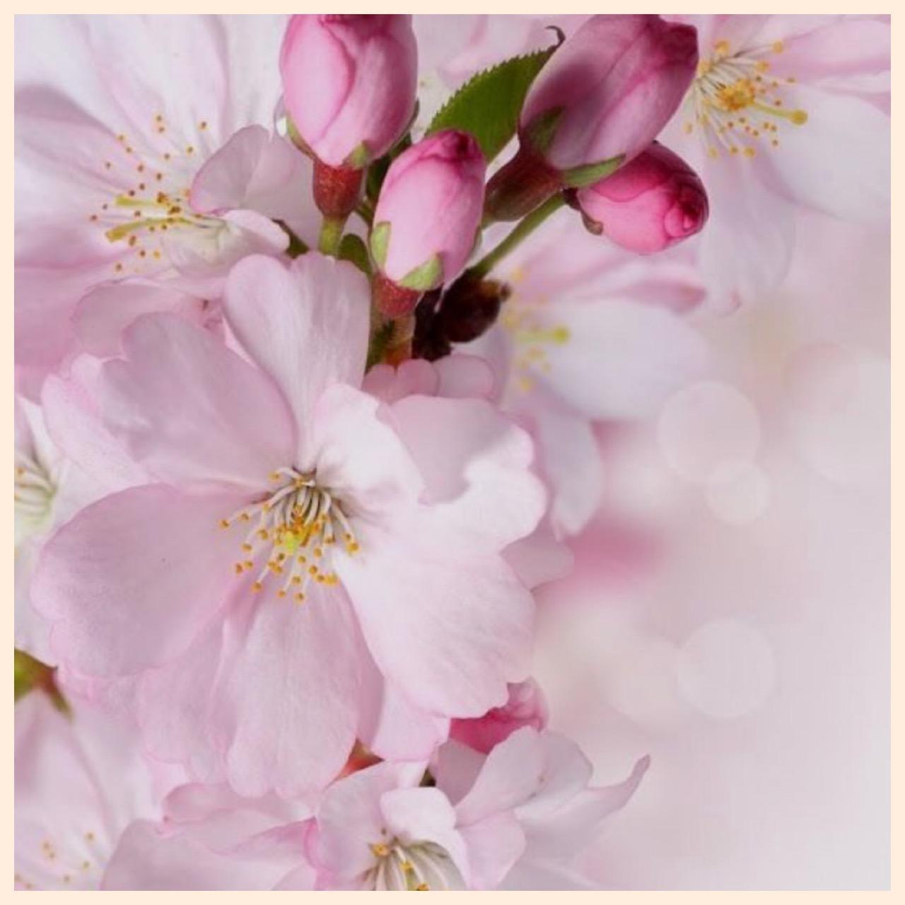 「桜、咲く?」04/18(04/18) 16:11 | ゆみこの写メ・風俗動画