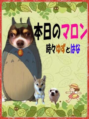 「ゆず盛り♪」06/10(06/10) 12:32 | 純菜の写メ・風俗動画