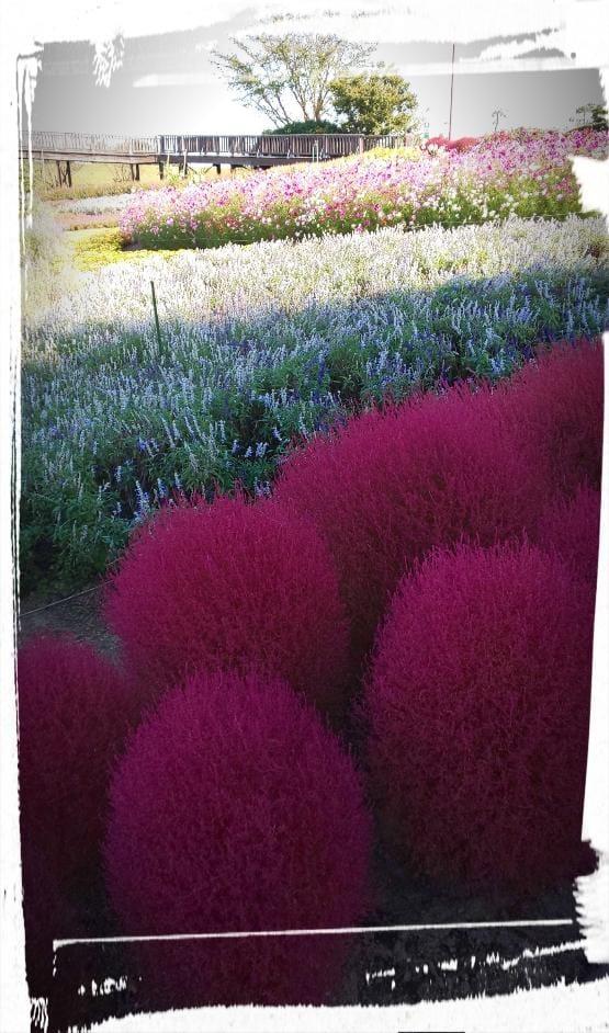 涼-りょう|横浜風俗の最新写メ日記