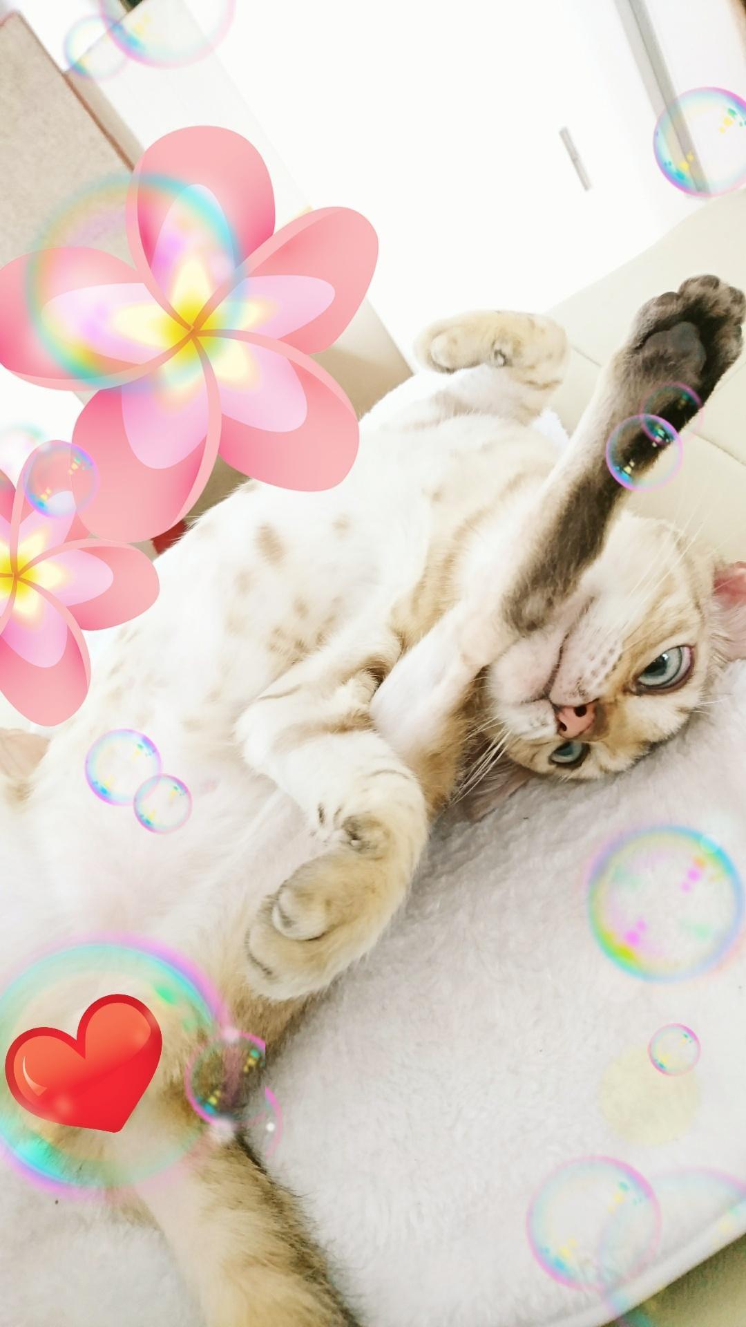 「おはよ〜ございます(*´∇`*)」01/05(01/05) 10:32 | 有村の写メ・風俗動画