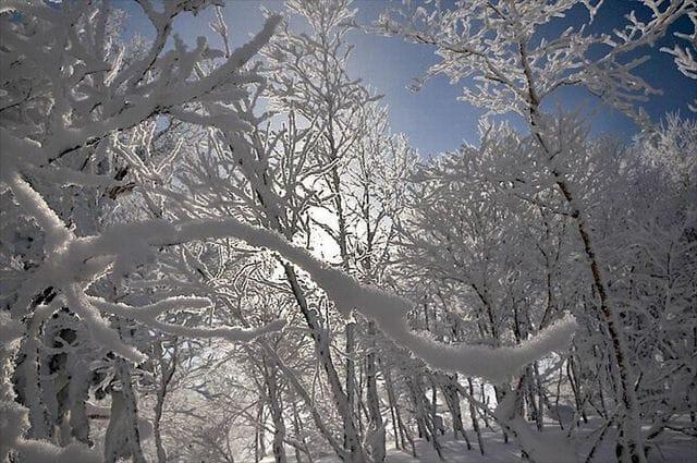「南大阪デリヘル  ありがとう」01/20(01/20) 14:13 | レイカの写メ・風俗動画