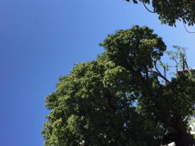 「木漏れ日?」10/27(10/27) 21:09 | かなの写メ・風俗動画