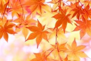 「秋」09/28(火) 12:08   あやの写メ日記