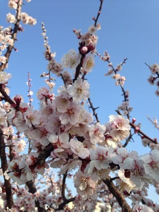 「こんばんは。」03/11(03/11) 22:11 | るいの写メ・風俗動画