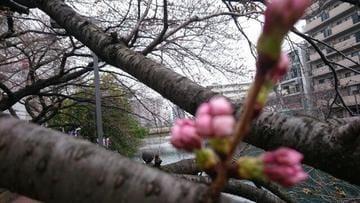 「今週もお仕事お疲れ様でした❤︎」03/16(03/16) 19:02 | ゆうの写メ・風俗動画