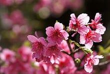 「定期。」03/17(03/17) 18:58   美月 桜の写メ・風俗動画