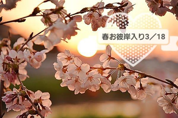 「お彼岸」03/18(03/18) 20:58 | 早乙女華恋の写メ・風俗動画