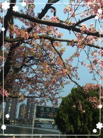 「お散歩」03/19(03/19) 18:08 | 絵梨子の写メ・風俗動画