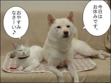 「おやすみなさい」03/20(03/20) 00:31   靜香(シズカ)の写メ・風俗動画