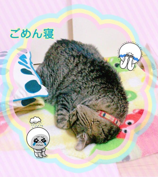 「おやすみばっかですみません( :?:  )」03/20(03/20) 17:39 | れむ☆極嬢エロカワ爆H乳小悪魔の写メ・風俗動画