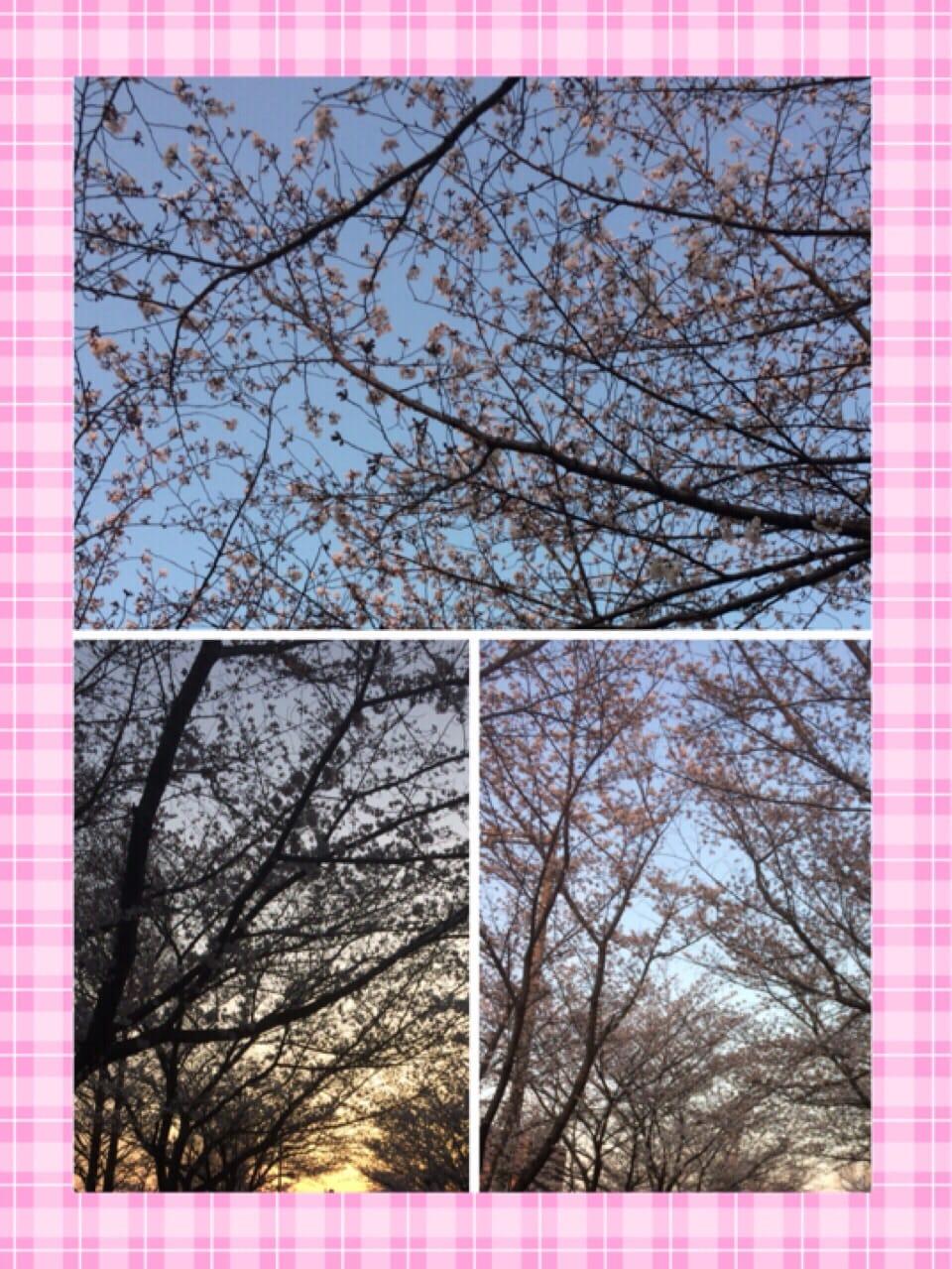 「今日から・・・?」03/27(03/27) 17:10   れなの写メ・風俗動画