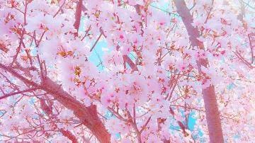 「おはようございます」03/28(03/28) 10:01 | ちはやの写メ・風俗動画