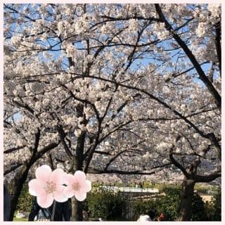 「まいかです♪」03/28(03/28) 21:02 | 安藤 まいかの写メ・風俗動画