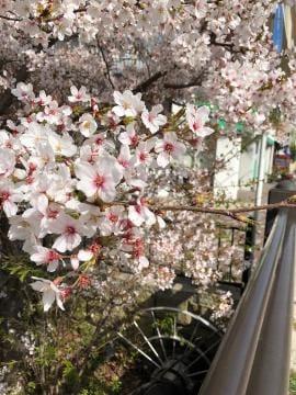 「ありがとう?」03/31(03/31) 18:57 | 向井地 りょうこの写メ・風俗動画