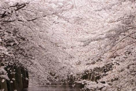 「こんにちは\(^^)/」04/01(04/01) 10:27 | 新人業界未経験❤️ななみの写メ・風俗動画