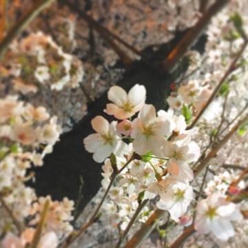 「こんにちわ( *´?`* )」04/03(04/03) 14:00 | ひなたの写メ・風俗動画