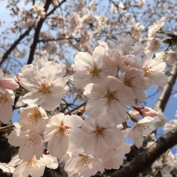 「出勤しましたー!」04/03(04/03) 14:18 | 永遠/とわの写メ・風俗動画