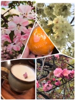 「ゆるっと日記47」04/05(04/05) 14:17 | ゆきの写メ・風俗動画