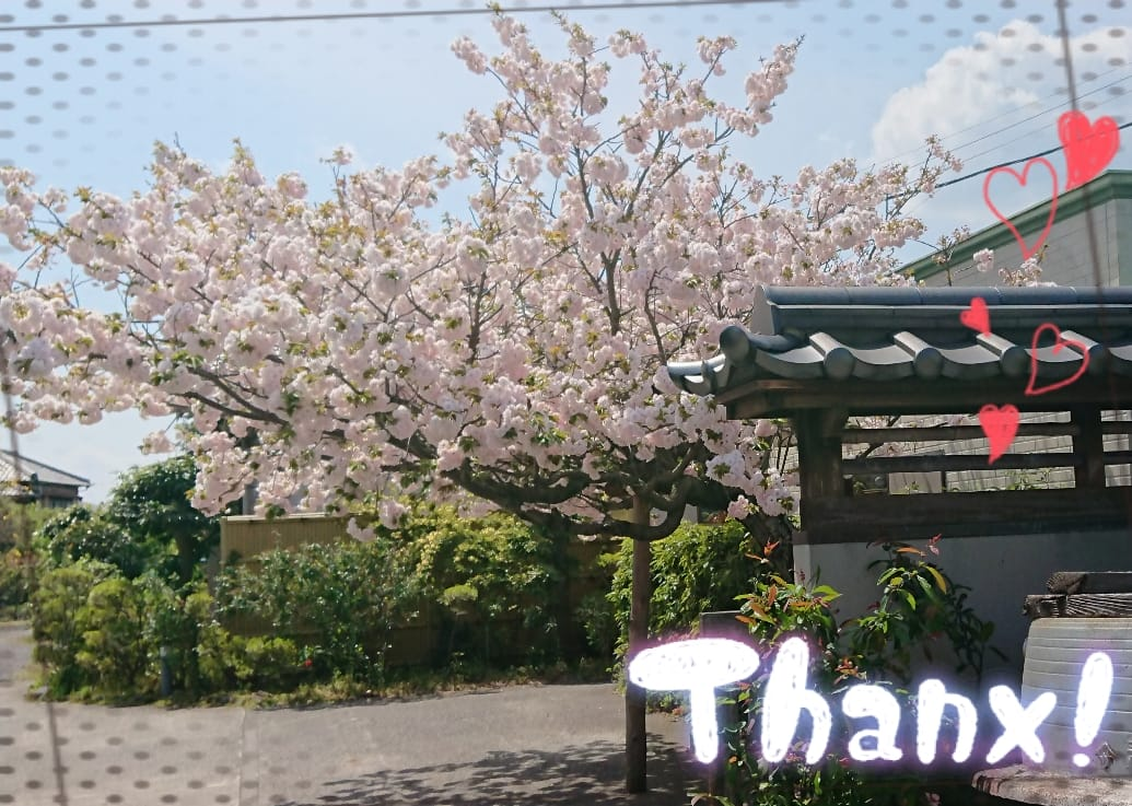 「有り難うございました(///∇///)」04/12(04/12) 20:12 | はすみの写メ・風俗動画
