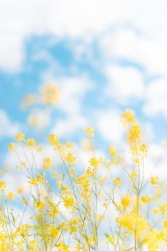 「お知らせ&お礼☆。.:*・゜」04/16(04/16) 12:02   宏音(ひろね)の写メ・風俗動画