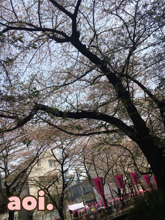 「お散歩♪♪」04/19(04/19) 11:38   あおいの写メ・風俗動画