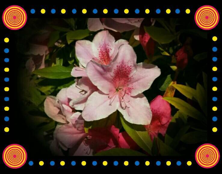 「さわです」04/23(04/23) 07:43 | さわの写メ・風俗動画