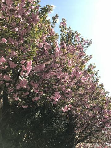 「今日は5時まで(*゚▽゚*)」04/25(04/25) 21:34   広川みりの写メ・風俗動画