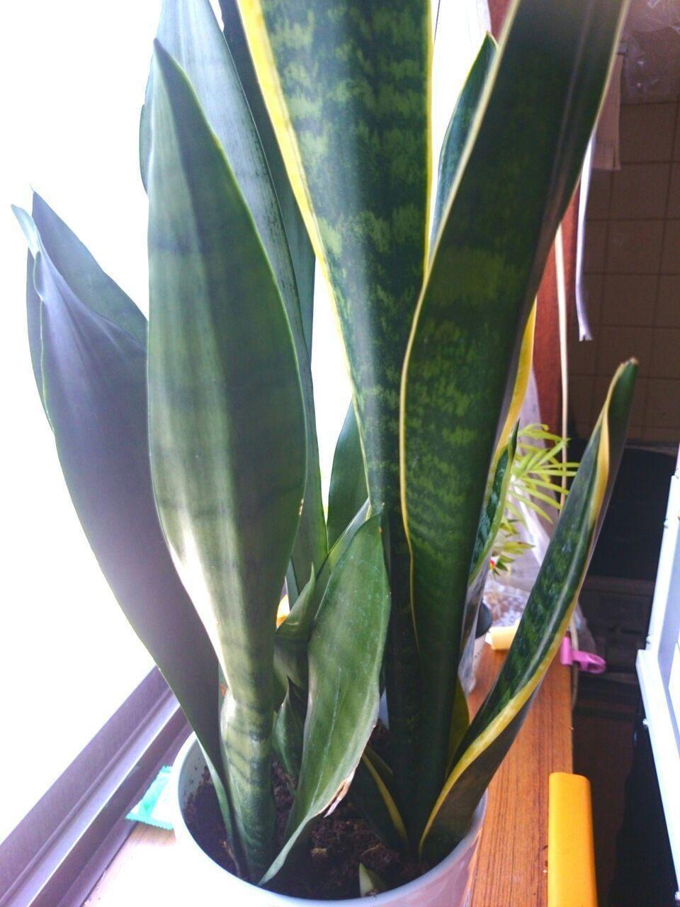 「植物〜*」05/22(05/22) 10:55   星野ともか(Mrs)の写メ・風俗動画