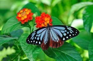 「蝶々と裸のイブ」05/23(05/23) 12:24 | 桃子(ももこ)の写メ・風俗動画