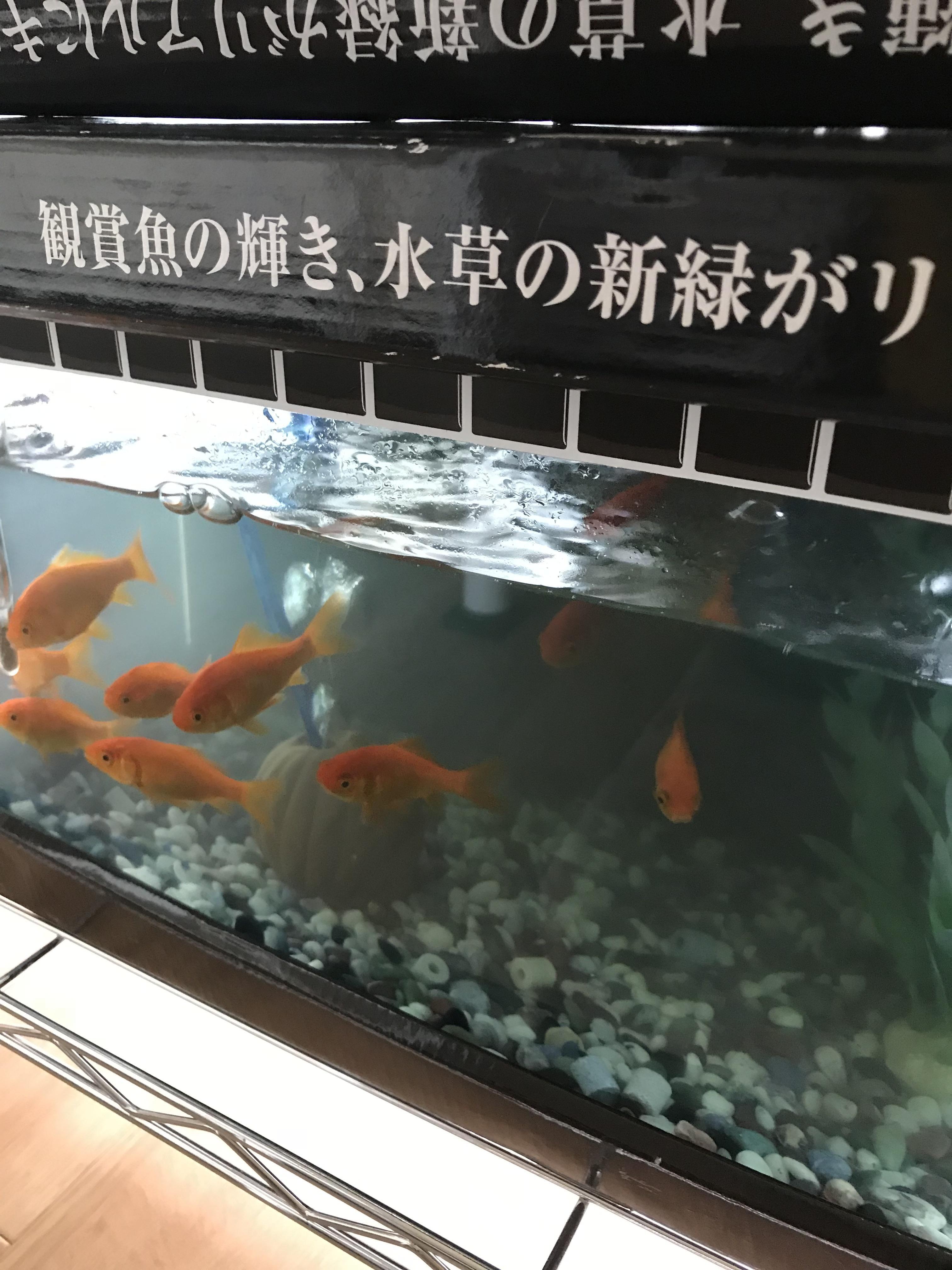 「こんにちは(^O^)」05/24(05/24) 12:12   ことみの写メ・風俗動画